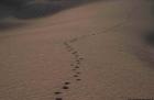 Dromdatour in die Sahara bei Mhamid