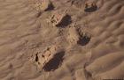 Dromdatour, Sahara, Mhamit