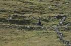 Seealpen Piemont Sommeiller Auffahrt 3009 Meter