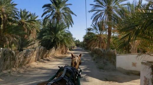 Kutschfahrt-durch-die-Oasen-von-Tozeur-Tunesien-einspurig-unterwegs